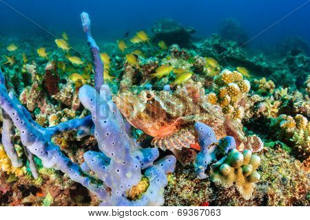 Scorpionfish on a reef