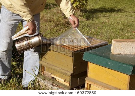 Beekeeper With Open Hive