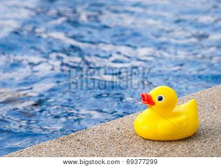 Rubber Duck Beside The Swimming Pool