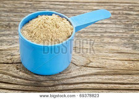 maca root powder  in a blue plastic measuring scoop against grained wood