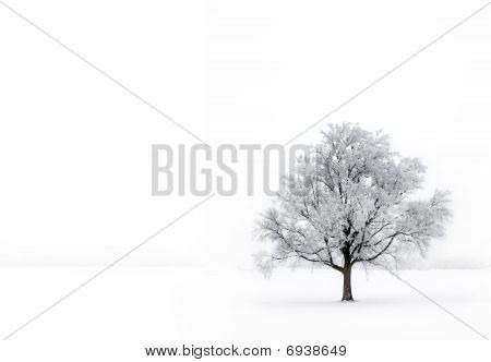 Single Tree In The Fog With Hoar-frost