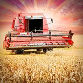 stock photo of harvest  - Combine harvesting wheat against colorful sunset - JPG