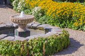 stock photo of black-eyed susans  - A classic fountain draped with Virginia creeper sits to one side in the middle of a path lined with yellow black eyed susans - JPG