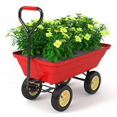 pic of hand-barrow  - Flowerbed in hand trolley - JPG