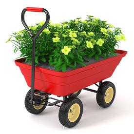 stock photo of hand-barrow  - Flowerbed in hand trolley - JPG