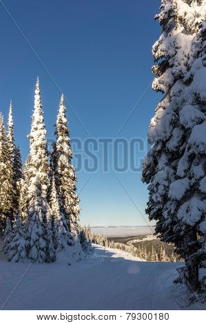 Snow covered trees and blue skies