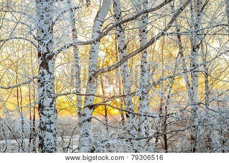 Winter Landscape With A Sunset In The Forest