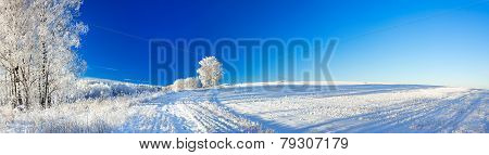 Rural Winter Landscape A Panorama With The Blue Sky, A Field And The Forest