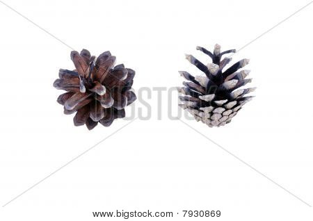 A Set Of Two Pine Strobiles Isolated On White