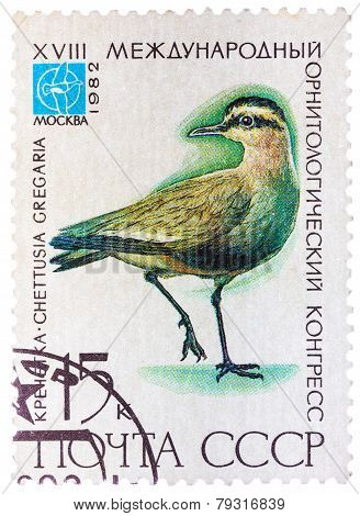 Stamp printed in USSR Russia shows a bird Chettusia gregaria