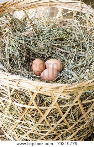 Chicken Eggs On A Straw In Bag