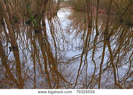 Swamp With Flooded Forest In Ravenna, Italy