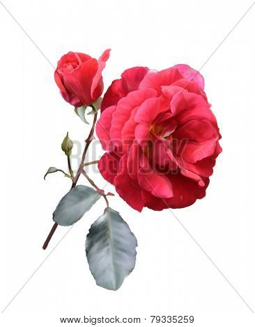 Digital Painting Of Red Rose Isolated On White Background
