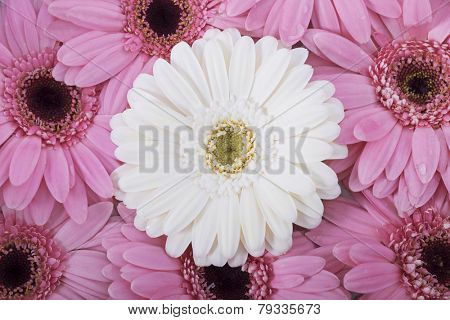 Wedding flower arrangement with Gerberas