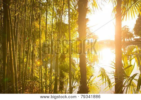 Palm Tree And Bamboo With Sun