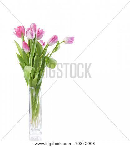 tulips flowers over white background