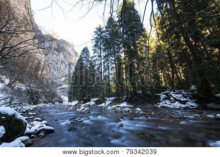 Mountain River In Pine Forest