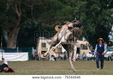 Dressage Horse, Fallen