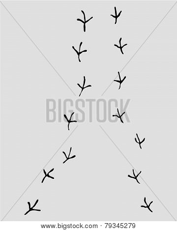Staza Ptica