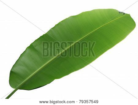 Wrong Side Of Banana Leaf