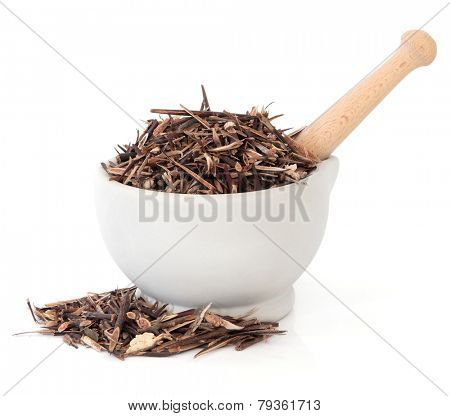 Chinese honey locust herb used in herbal medicine in a stone mortar with pestle over white background. Zao jiao