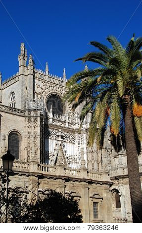 Cathedral and palm tree, Seville.
