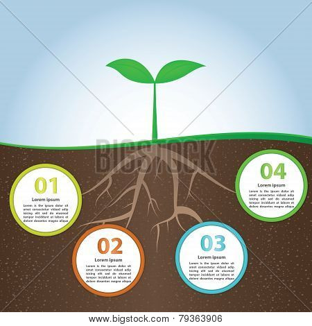 Plant And Root Infographic Background Design Template