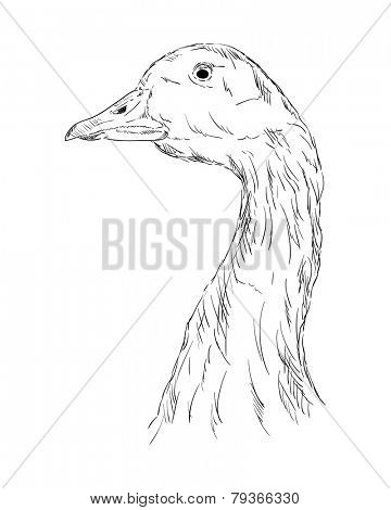 vector - A goose head isolated on a white background