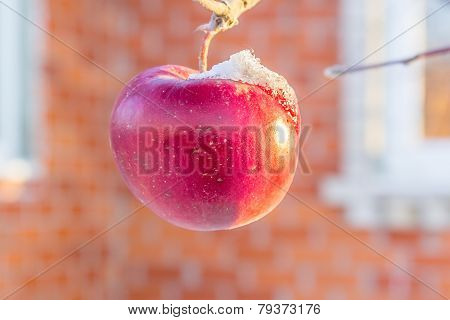 Iced Red Apple On A Branch Close Up
