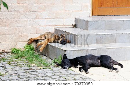 Homeless Dogs Sleeping