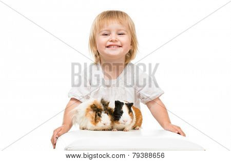 Little cute baby girl with guinea pigs. Isolated on white background.