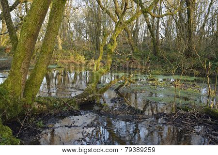 Wet Woodland, Charterhouse