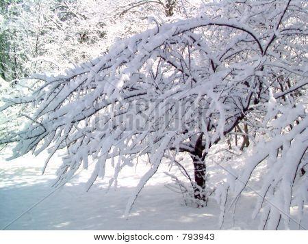 WinterWhite4