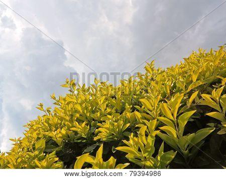 flowery Landscape garden