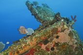 image of angelfish  - Gray Angelfish and Foureye Butterflyfish swimming over a coral encrusted shipwreck  - JPG