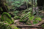 picture of hollow log  - The lush green gorge of Conkles Hollow located in Hocking Hills State Park - JPG