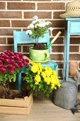 stock photo of plant pot  - Flowers in pot on chair - JPG