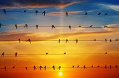 pic of sun perch  - flock of birds on a background of sunrise - JPG