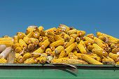 pic of maize  - Corn maize cobs during harvesting season loaded into a trailer versus crystal clear sky - JPG