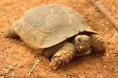 stock photo of testudo  - Crawling tortoise in the nature at the zoo