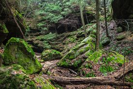 stock photo of hollow log  - The lush green gorge of Conkles Hollow located in Hocking Hills State Park - JPG
