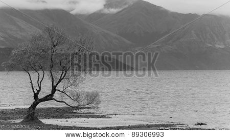 The Lonely Tree At Lake Wanaka In New Zealand