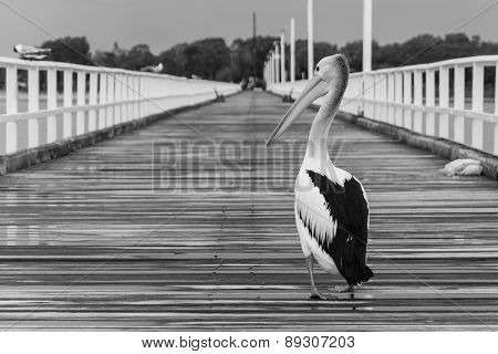 A Pelican At The Pier