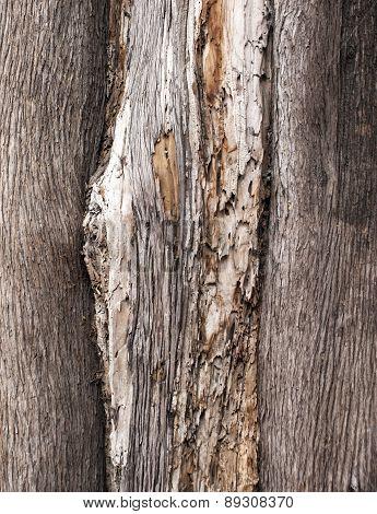 bark2