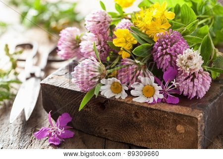 colorful medical flowers and herbs