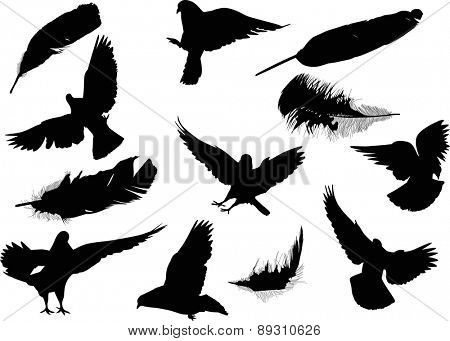 illustration with pigeon and feather silhouettes isolated on white background