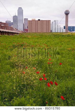 Dallas Texas City Skyline Metro Downtown Trinity River Wildflowers