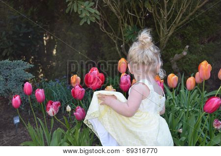 Toddler looking at tulips