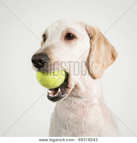 Dog Tennis