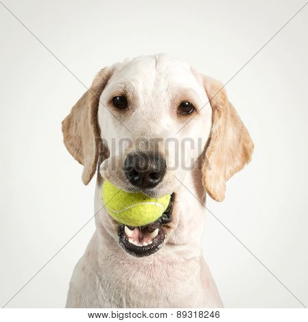 Dog Tennis.